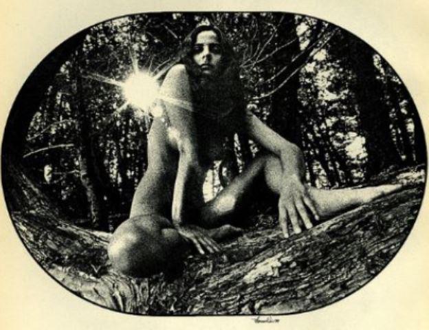 Thomas Weir. Virgin forest.