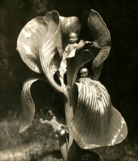 Untitled Photomontage by Claude Cahun, 1936