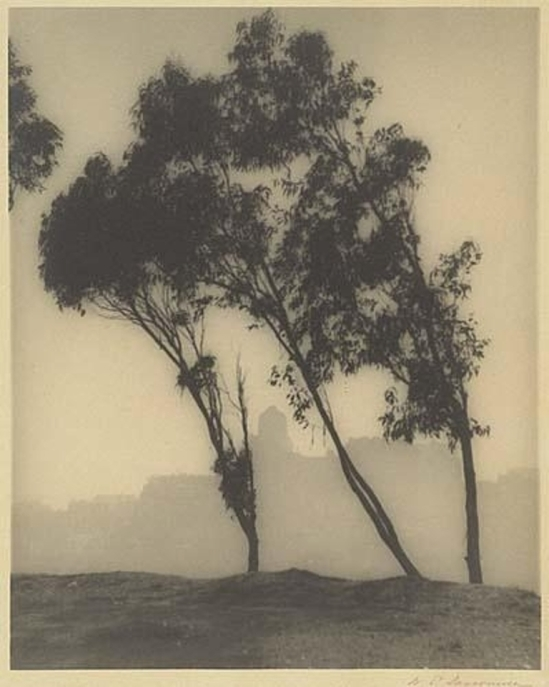 William E. Dassonville. Eucalyptus trees and San Francisco skyline 1920 Via mutualart