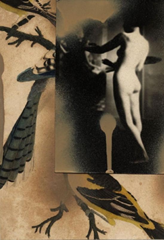 Paul Cava, Bluejay 1980. Collage Via anamorfose