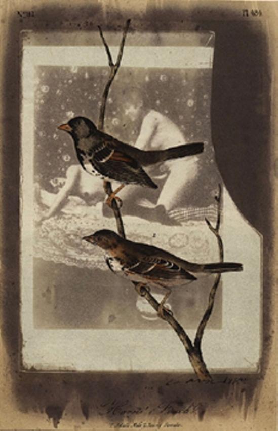 Paul Cava. Finch 1980 Via anamorfose