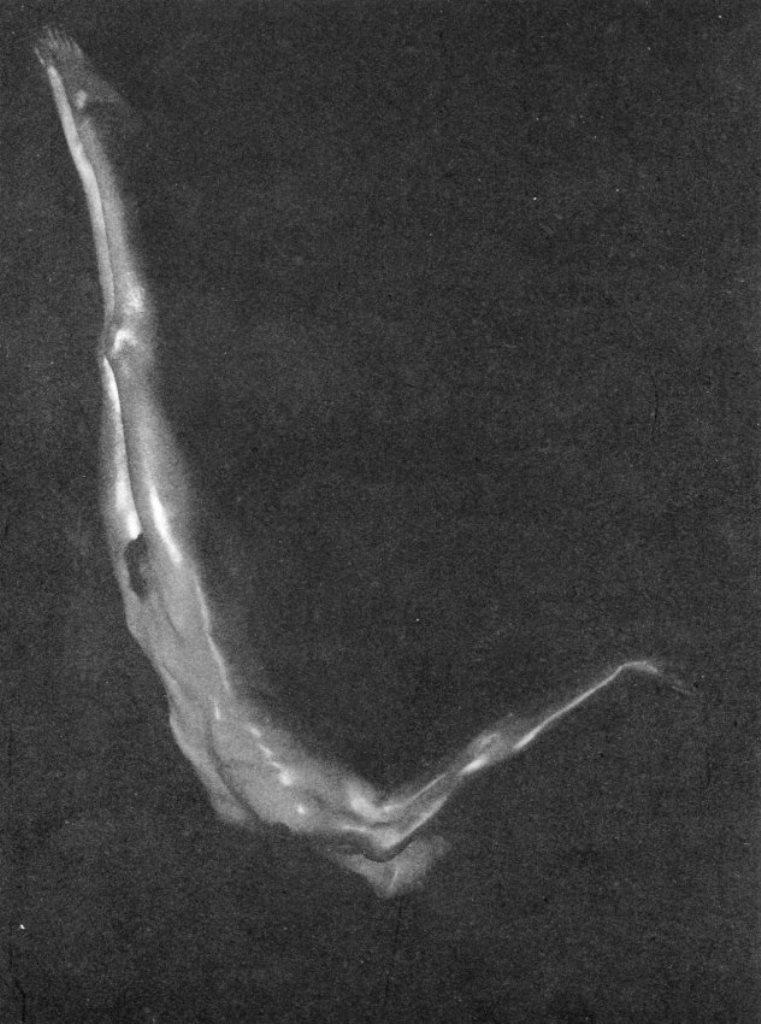 Maurice Beck. Nu, plongeon 1933 Via liveauctioneers