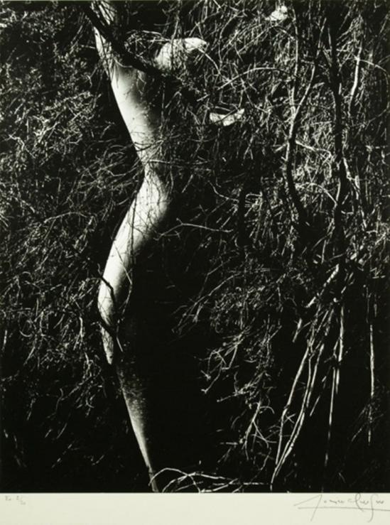 Lucien Clergue. Nu de la forêt 1970 Via baruchfoundation