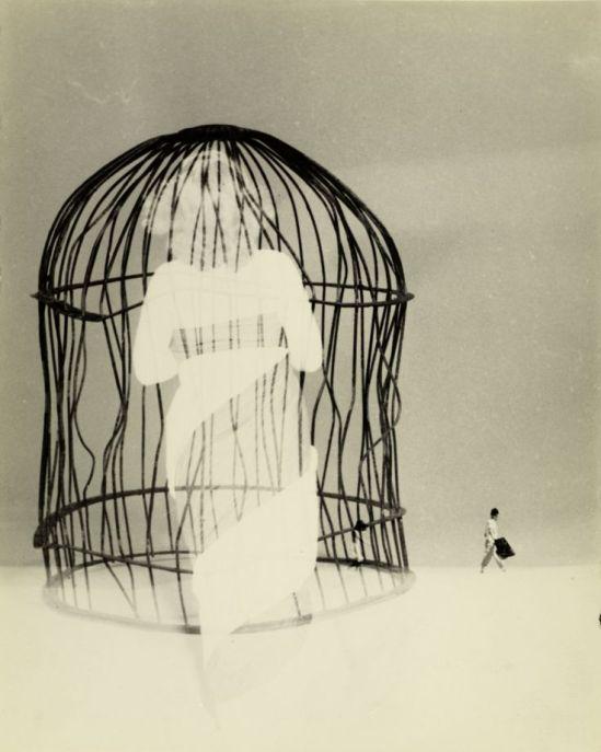 Kansuke Yamamoto. I'd like to think while in the body of a horse 1964 ©Toshio Yamamoto