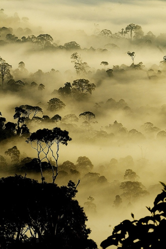 ® Nara Simhan. Typical rain forest view from Borneo Via flickr