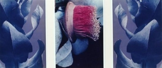 Max Dupain. Eucalyptus macrocarpa (triptych) 1984. Via mutualart