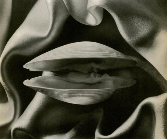 Ruth Bernhard. Clam 1936