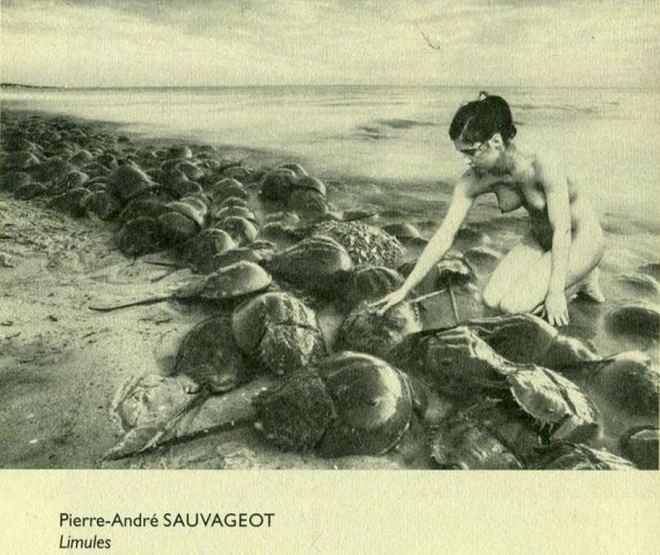 Pierre-André Sauvageot. Adèle et les limules. Via surrintblogspot