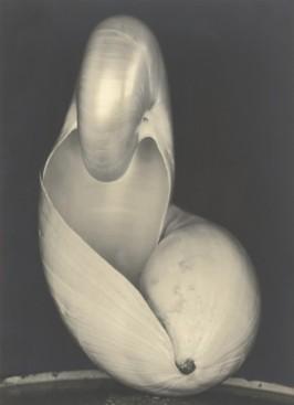 Edward Weston. Shell 1927