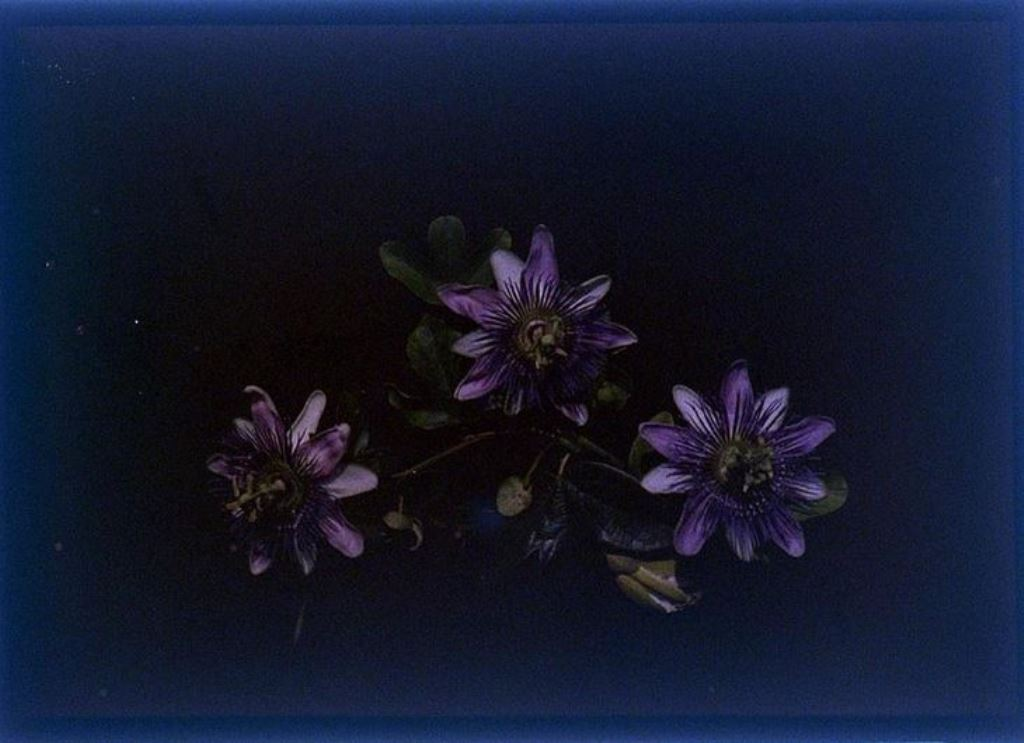 charles-c-zoller-cut-flowers-1907-1932-autochrome-via-eastmanuseum