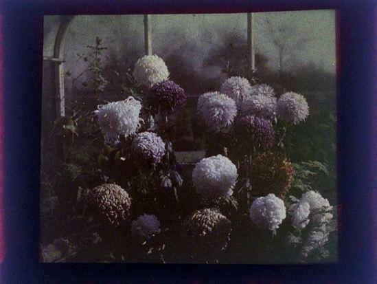charles-c-zoller-flowers-1907-1932-autochrome-via-eastmanuseum
