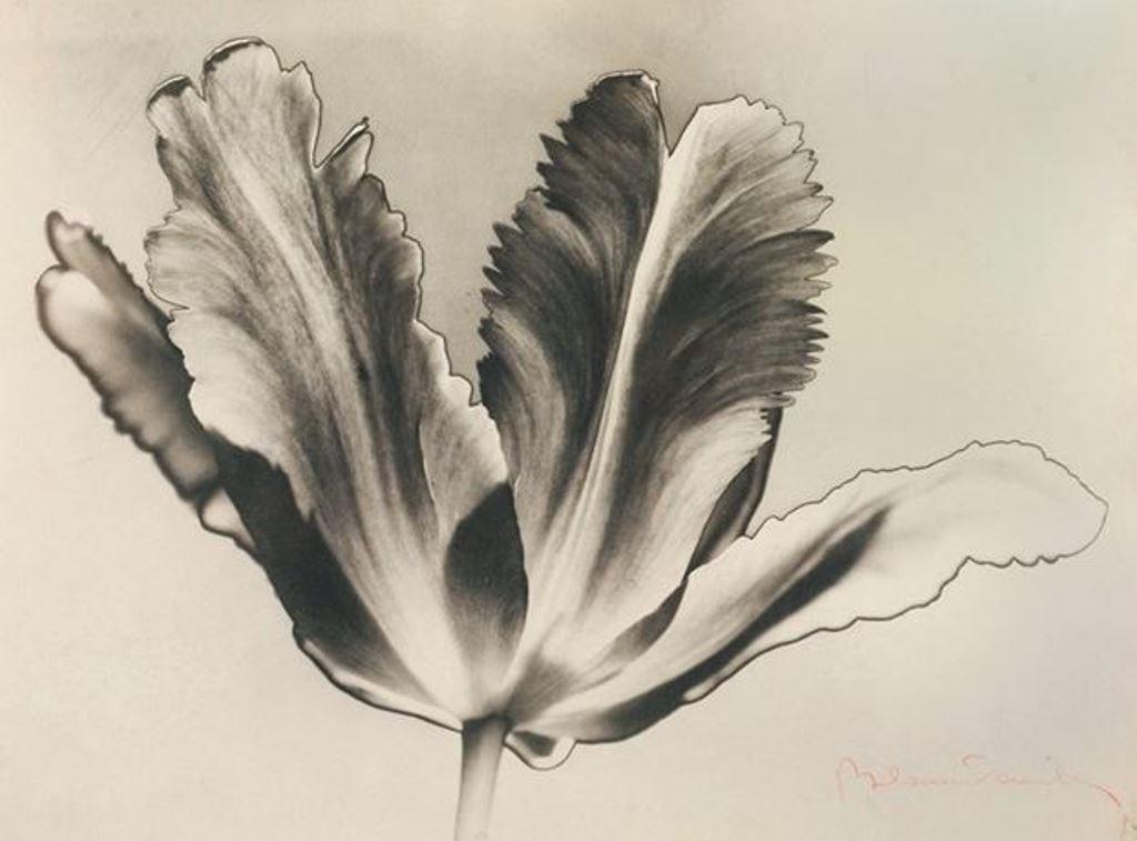 Blanc & Demilly. Tulipe 1935. Via artnet